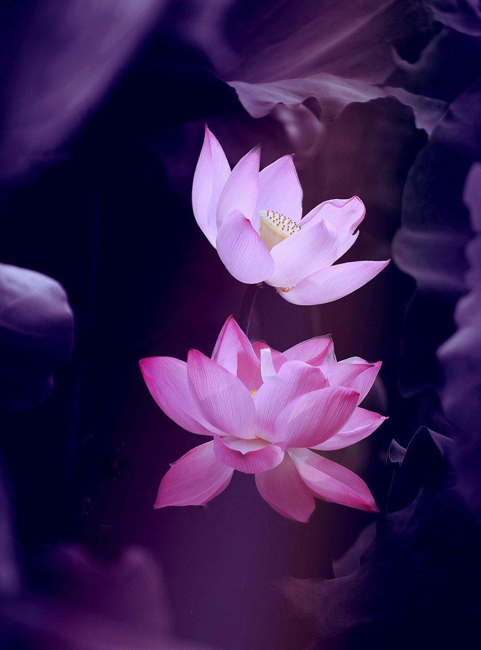 lotus soin énergétique